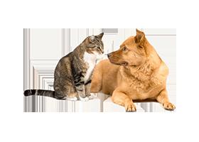 Как выбрать двери для дома с котами и собаками?